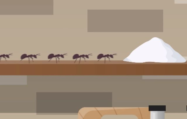 how to get rid of ants overnight