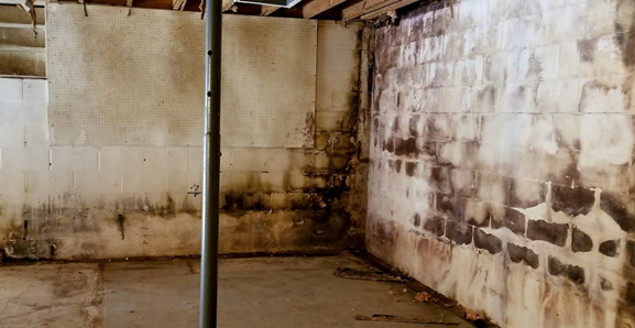 how to get rid of mold in basement